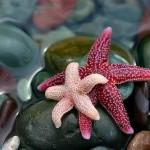 1 estrella de mar