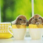 Conejos Bebes_800
