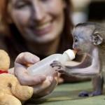 bebe mono