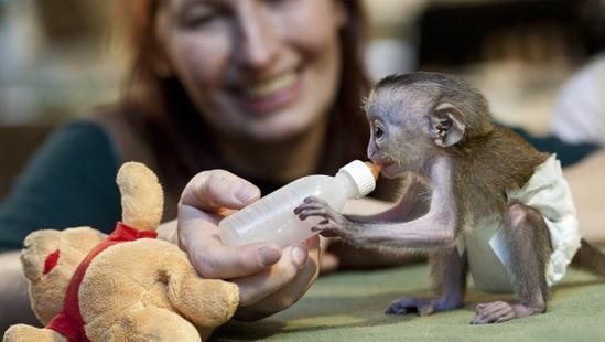 Mono y bebé tierno - Imagui