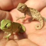 camaleones-.-