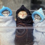 gatos con gorrito de ebeb