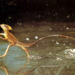 animales-reptiles-23831