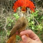 aves exoticas del amazonas y del mundo11