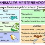 esquema vertebrados