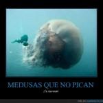 medusa que no pica