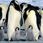PKMC_Penguin
