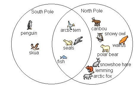 animales-que-viven-en-el-polo-sur